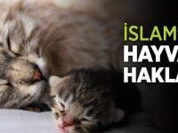 islam_hayvan_haklari-702×336-1