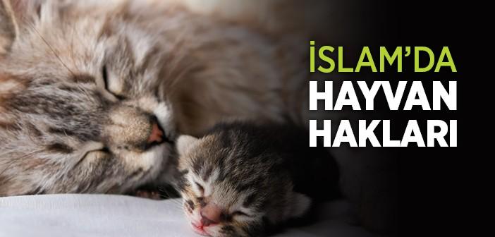 Kuran-ı Kerim'de Hayvanlar ve Hayvan Hakları